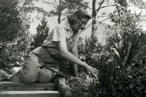 Eudora weeding on steps leading into upper garden, 1940s.
