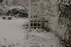 A rare winter snow blankets the same rose arbor, detailing form and structure in the garden.