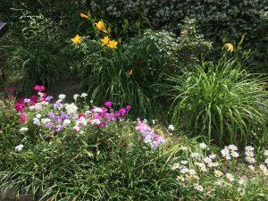Spring 2016 Garden