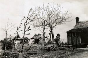 bottle-trees-(3)-w